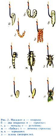 наживка червя на карася